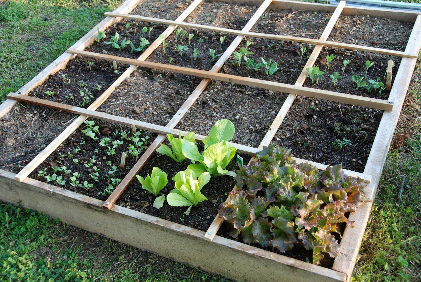 jardin ou potager en carré