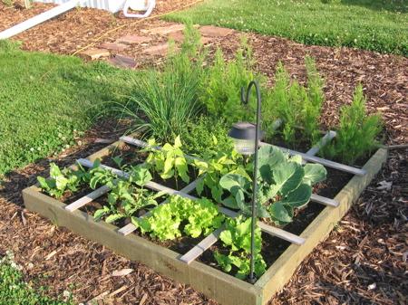 Jardin ou potager en carr 5 le blog de doug for Blog jardin potager