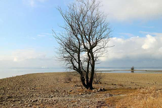 Arbrer mort de sécheresse - la communication des plantes
