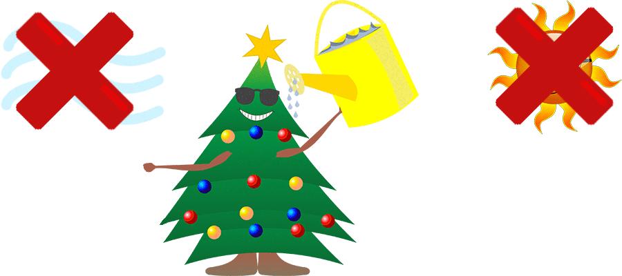 Pour conserver un sapin de Noël, il ne faut pas l'exposer aux courants d'air ni au soleil et l'arroser régulièrement