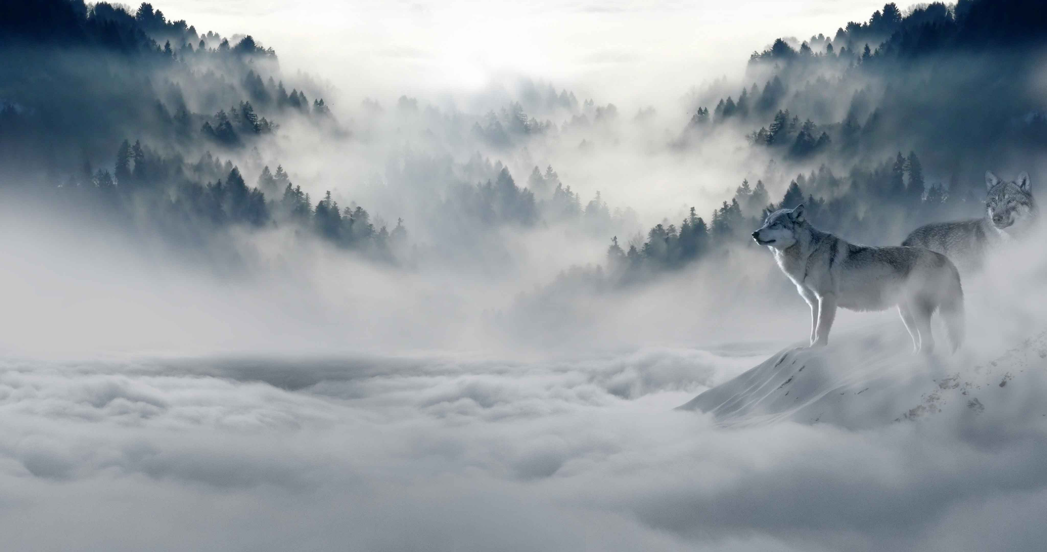 Paysage montagneux, embrumé et enneigé avec une forêt de conifères et deux loups