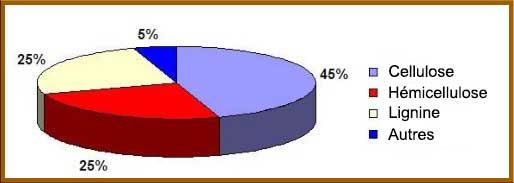 Diagramme criculaire sur le pourcentage de chaques éléments dans le bois : Lignine et Hémicellulose : 25% chacuns, 45% pour la cellulose.